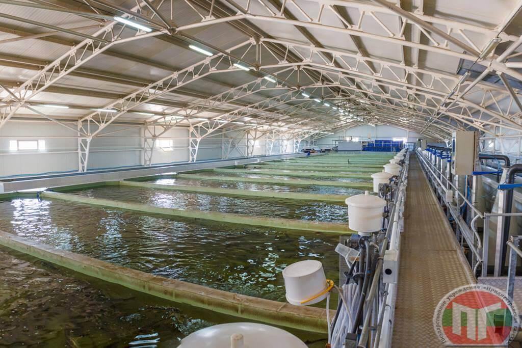 Скважины, через которые поступает вода в бассейны с рыбой. Глубина каждой скважины – 70 метров