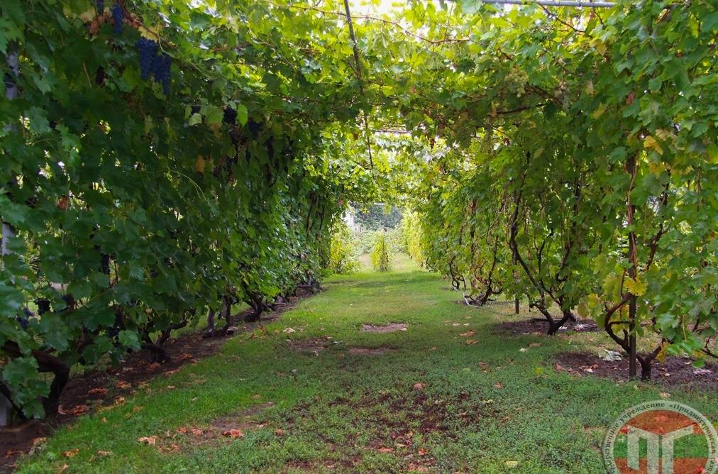Виноградные туннели