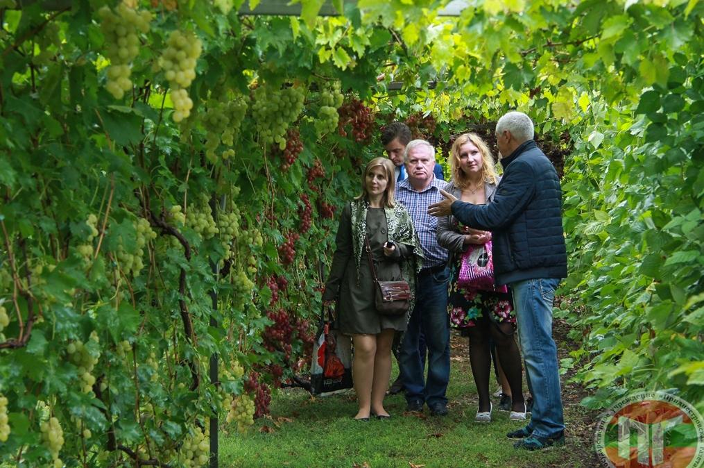 «Эта экскурсия интересна тем, что виноградные кусты расположены на арках и создается впечатление, что идешь по туннелю. В перспективе хочу создать виноградный лабиринт с указателями», – поделился планами на будущее Николай