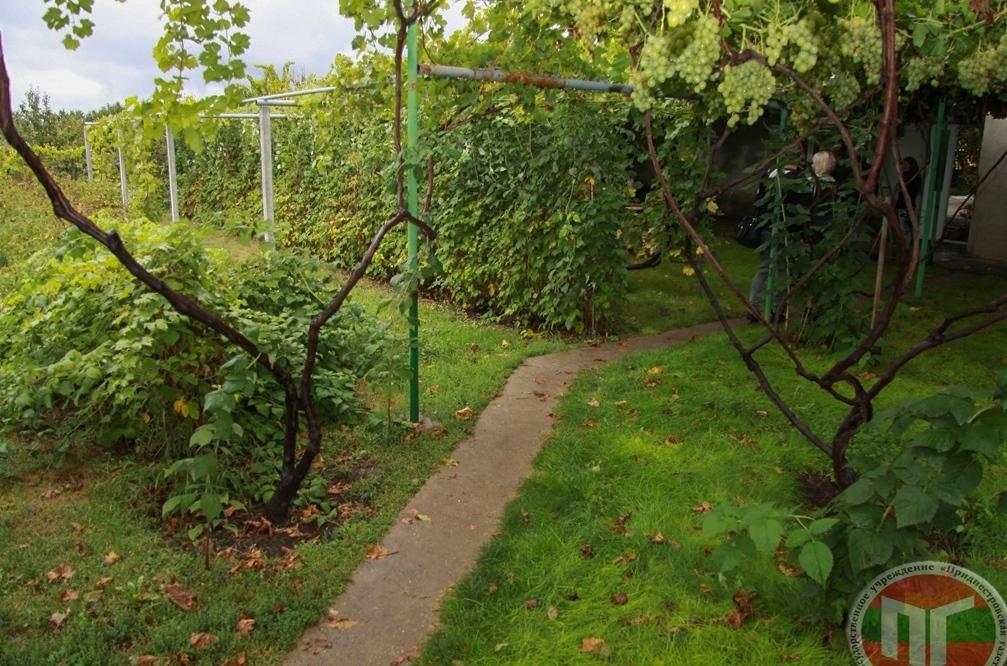 «Гроздья винограда в свежем виде закладываются на хранение, поэтому даже зимой турист может насладиться сладкими, вкусными и свежими ягодами», – рассказал Николай