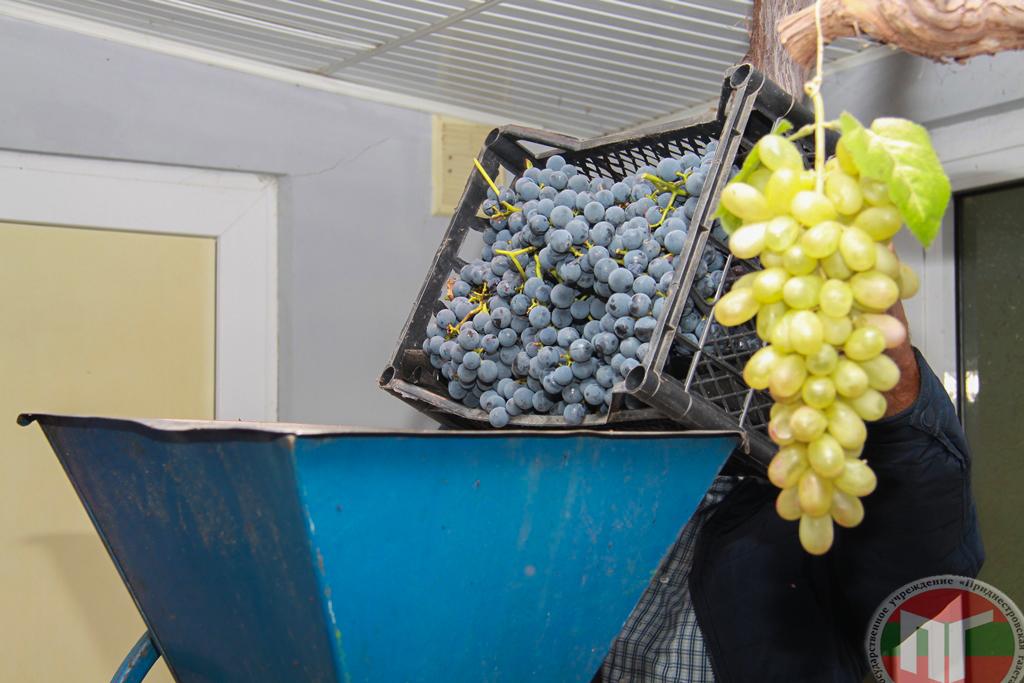 «Собираем виноград вот в такие ящики и выкладываем ягоды в дробилку. Затем дробим виноград. У нас получается вкусный ароматный сок», — рассказал Николай