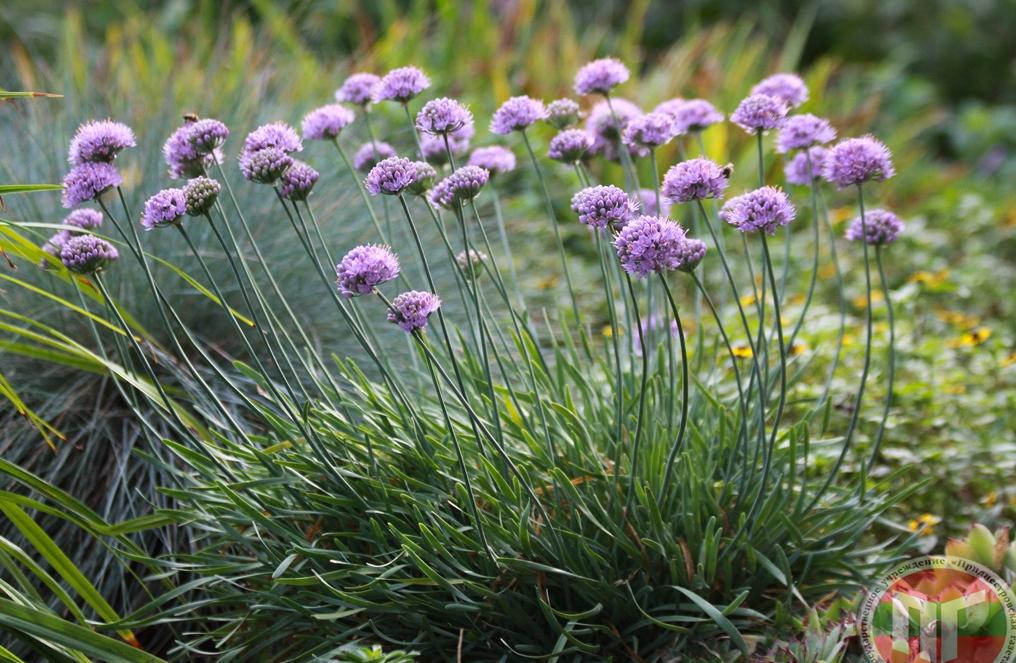 В ботаническом саду регулярно проводятся экскурсии, на которых можно более подробно узнать о каждом растении, а также посетить поляну с цветами, кустарниками и деревьями, которые занесены в Красную книгу