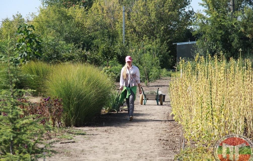 Сотрудниками ботанического сада проводятся консультации для населения по оказанию помощи в культивировании растений, а также реализация посадочного и семенного материала для озеленения населенных пунктов и приусадебных участков