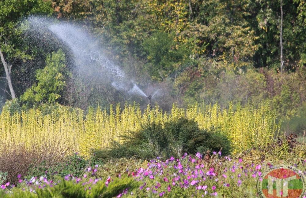Красота и многообразие цветов – это не единственное достижение работников ботанического сада. Ведь вся коллекция цветочно-декоративных растений, редких пищевых, ароматических и лекарственных растений представлена в питомнике