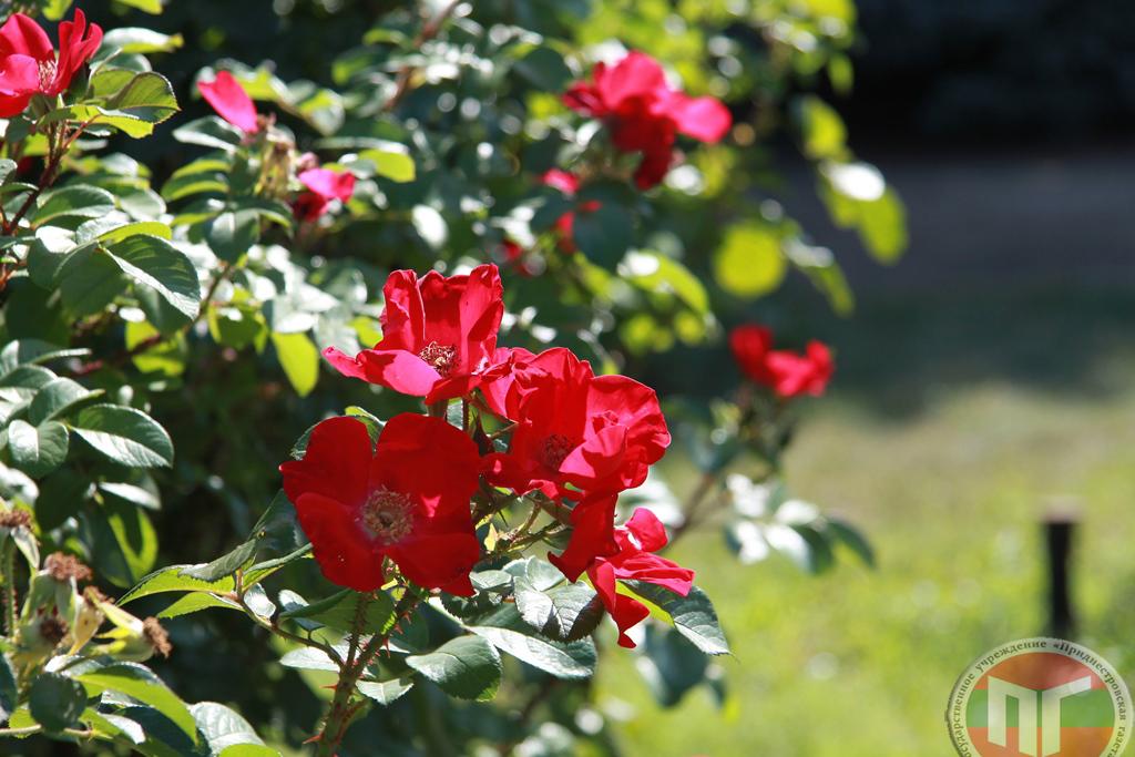 Также за последние несколько лет розарий пополнился коллекцией миниатюрных роз