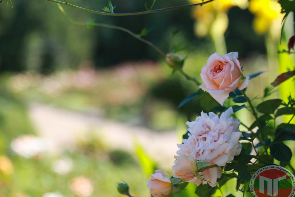 В 1994 году государственному ботаническому саду была передана земля общей площадью 22 га